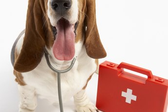 What Are the Causes of Dogs Biting Bottoms?