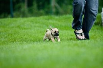 Teaching your pup some boundaries will maximize the fun.