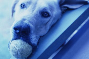 Ball-Throwing Machines for Dogs