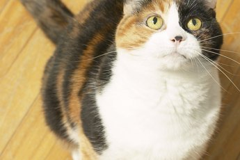 Metronidazole for Cats
