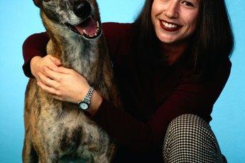 Autoimmune Disorders in a Greyhound Dog