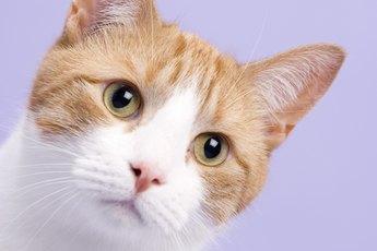 Trimethoprim for Cats