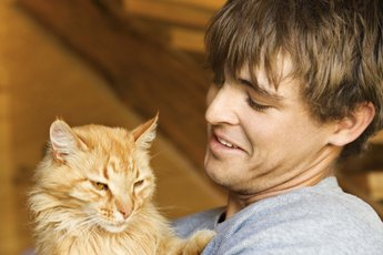 Can Neutering Cats Cut Down on Urine Odor?