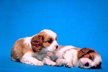 Choose a puppy food that suits your puppy's needs.