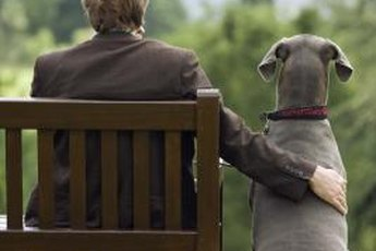 Find the perfect canine companion for your personality.