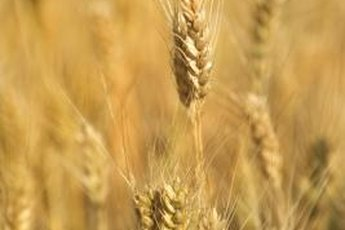 People with gluten sensitivity must avoid foods made with wheat, rye and barley.