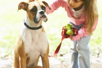 Boxers are gentle toward and protective of children.