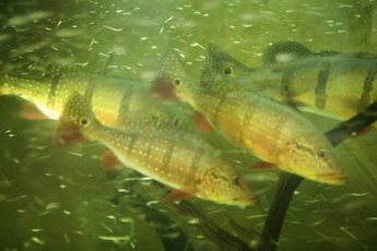 Fish can become stressed or ill, or even die, if water is too acidic for them.