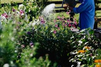 Group plants in your garden by water needs and irrigate during early morning to conserve water.