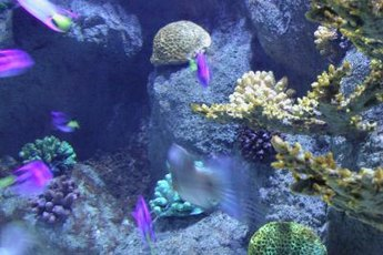 Given sufficient life, coral will actually produce oxygen and absorb carbon dioxide.
