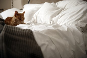 How to Stop a Cat from Urinating on Beds