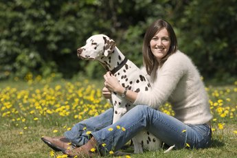 Hay Fever Symptoms in Dogs