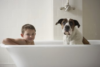 Differences Between Dog Shampoos & Human Shampoos