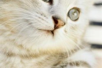 Get your kitten's peepers regularly checked by a vet.
