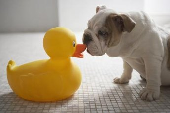 Yes, that ducklike honking sound actually came from your dog.