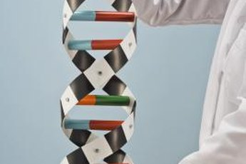 Clinical geneticists treat patients with genetic illnesses.