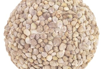 Can Lentils Build Muscle?
