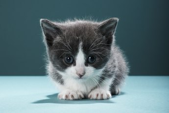 What Is Safe for a Kitten to Eat?