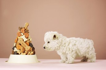 How to Switch Puppy Food Within the First Months