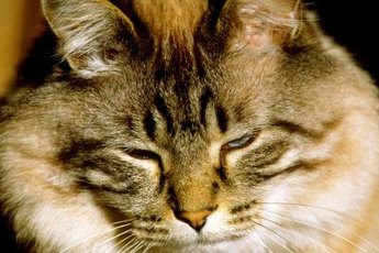 High blood glucose levels can pose a problem for your kitty