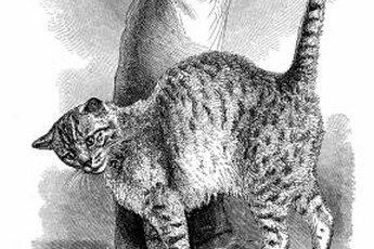 Rubbing behavior is not uncommon in the feline world.