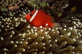 Aquarium Sump Sizes
