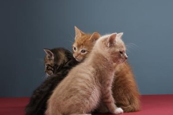 It's not unusual for kittens to share the same mother but not the same father.