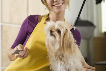 Tips For How to Groom Hair on the Face of a Shih Tzu Dog
