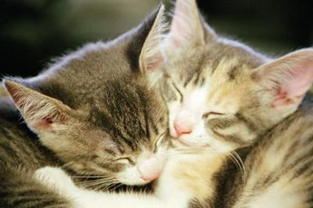 Chlamydial infections often affect young cats living in multi-cat households.