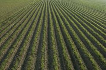 Landowners can use online directories or agricultural real estate services to rent out farmland.