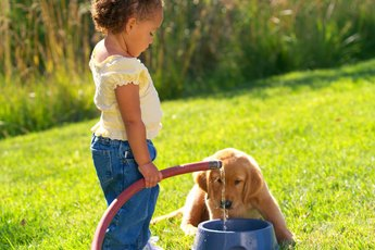 How to Stop a Puppy From Playing in Water Dish