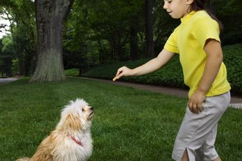 Dog Behavior Modification Techniques for Urinating in the House