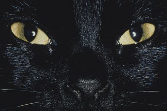 What Does It Mean When a Cat Gets a Black Spot on the Iris?