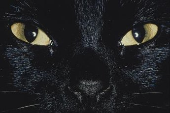 Your cat's pupils can reveal a lot about how she's currently feeling.