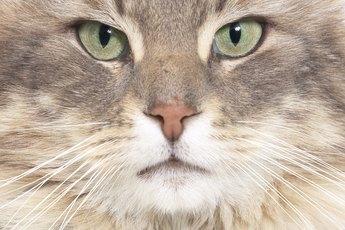 Sudden Aggressive Behavior in Cats