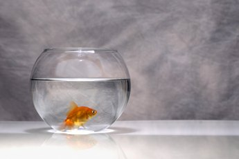 Do Goldfish Need a Tank With Filtered Water?