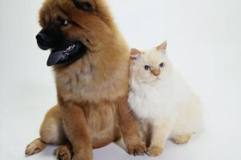 The ever enigmatic canine-feline relationship: perhaps strange, but not concerning.