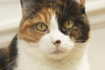 Kitty birth control. Who knew?