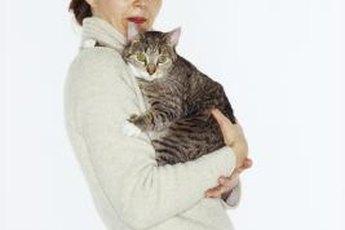 Love is mutual between felines and their people.