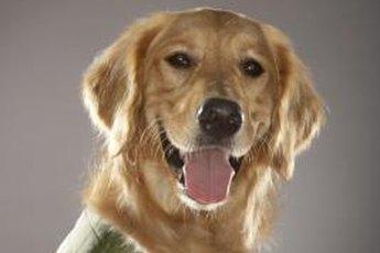 Make a plain vest reflective for dog safety.