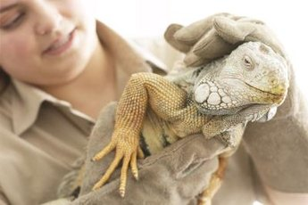 Working with exotic animals requires patience and observational skills.