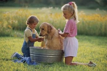 Glycerine shampoo cleans and soothes your dog's skin.