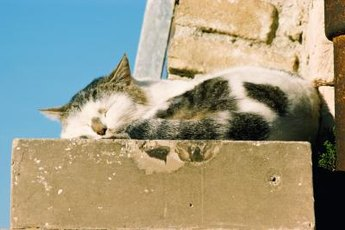 Cats who spend too much time sunbathing can get sunburn.