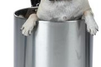 Keep your trash can closed and far away from your pooch.