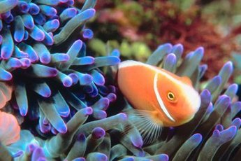 Reef aquariums feature both fish and invertebrates.