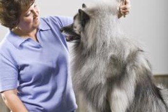 Maintenance brushing can help manage unruly shedding.