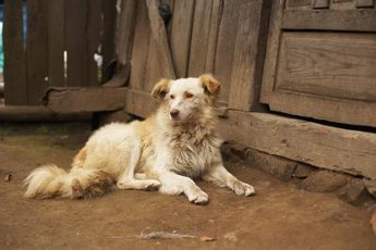 Doggie in need of a bath? Water is not always the answer!