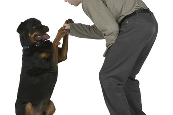 How to Calm Your Rottweilers