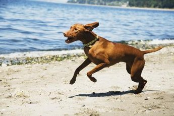 A dog's hyperactivity may be related to diet.