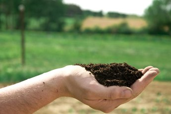 What Is the Difference in Organic Matter Soil & Topsoil?